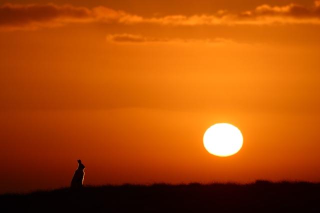 mountain-hare-at-dawn